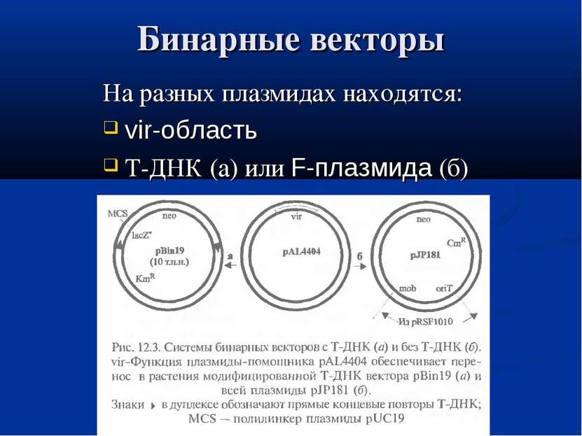 Бинарные векторы На разных плазмидах находятся: vir-область Т-ДНК (а) или F-п...