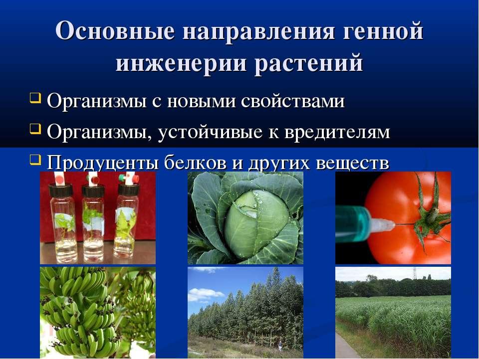 Основные направления генной инженерии растений Организмы с новыми свойствами ...