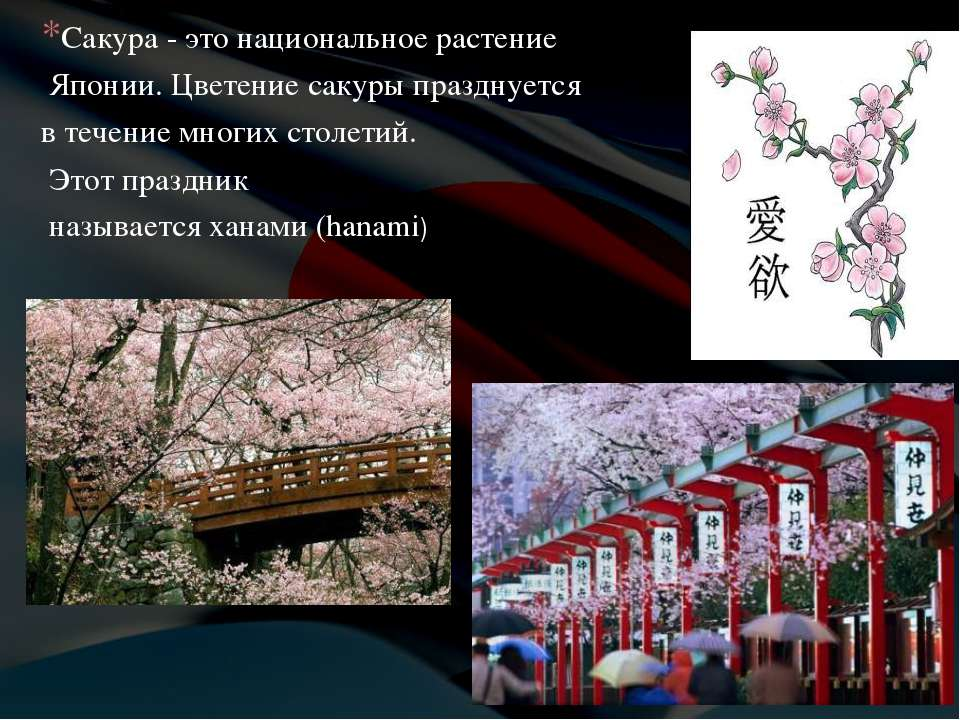 Сакура - это национальное растение Японии. Цветение сакуры празднуется в тече...