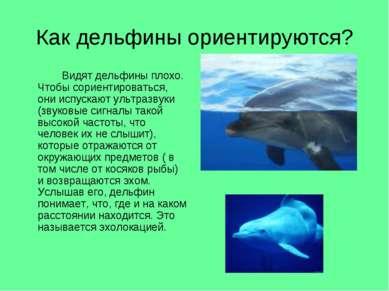 Как дельфины ориентируются? Видят дельфины плохо. Чтобы сориентироваться, они...