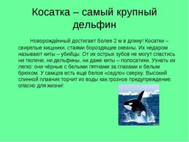 Косатка – самый крупный дельфин Новорождённый достигает более 2 м в длину! Ко...