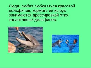 Люди любят любоваться красотой дельфинов, кормить их из рук, занимаются дресс...