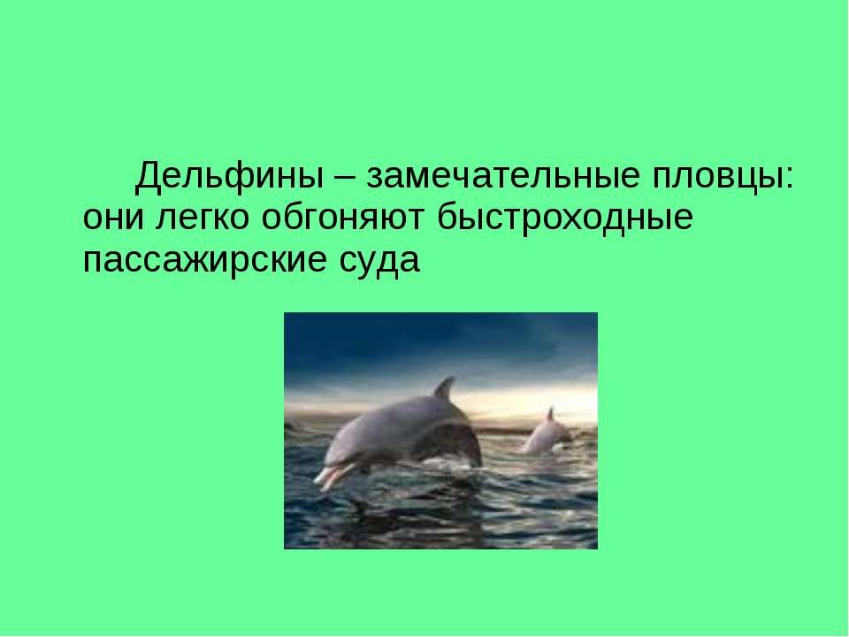 Дельфины – замечательные пловцы: они легко обгоняют быстроходные пассажирские...