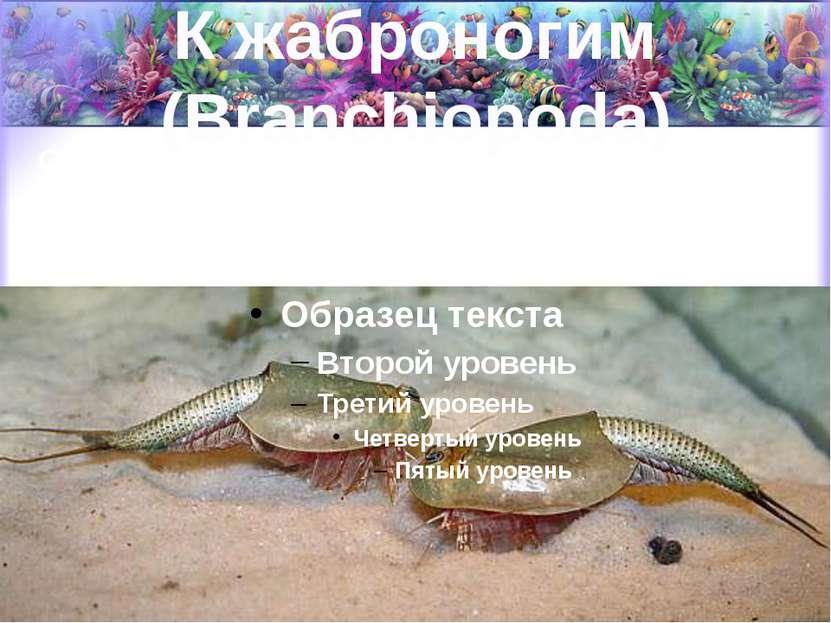 К жаброногим (Branchiopoda) Относятся пресноводные формы (водяные блохи, щитн...