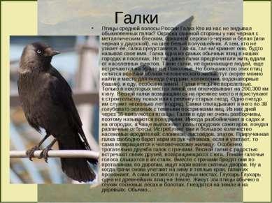 Галки Птицы средней полосы России Галка Кто из нас не видывал обыкновенных га...