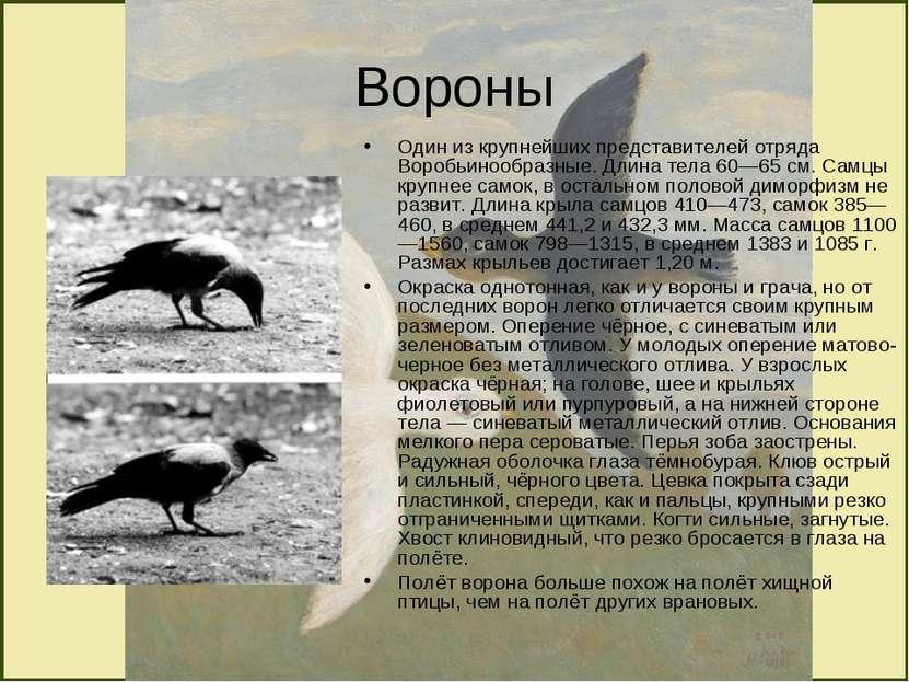 Вороны Один из крупнейших представителей отряда Воробьинообразные. Длина тела...