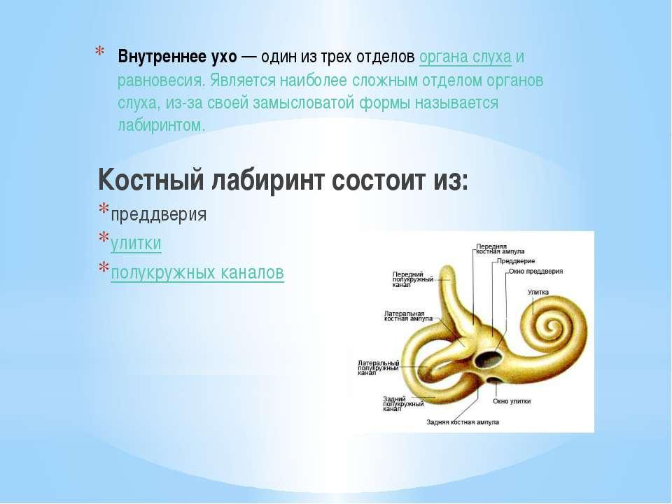 Внутреннее ухо— один из трех отделоворгана слухаи равновесия. Является наи...