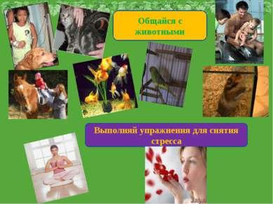 Общайся с животными Выполняй упражнения для снятия стресса