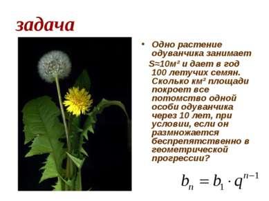 задача Одно растение одуванчика занимает Ѕ≈10м² и дает в год 100 летучих семя...