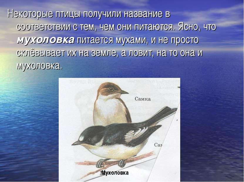 Некоторые птицы получили название в соответствии с тем, чем они питаются. Ясн...