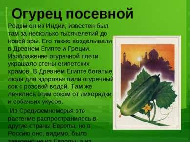 Огурец посевной Родом он из Индии, известен был там за несколько тысячелетий ...