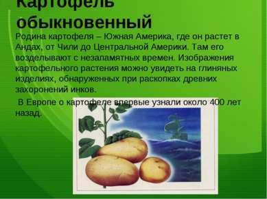 Картофель обыкновенный Родина картофеля – Южная Америка, где он растет в Анда...