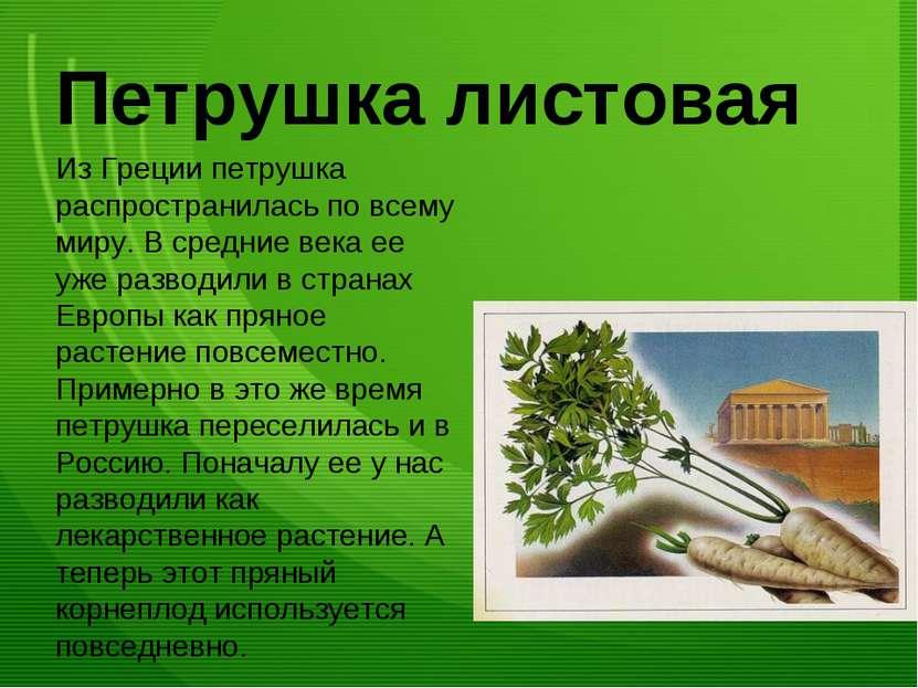 Петрушка листовая Из Греции петрушка распространилась по всему миру. В средни...