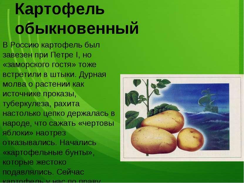 Картофель обыкновенный В Россию картофель был завезен при Петре I, но «заморс...