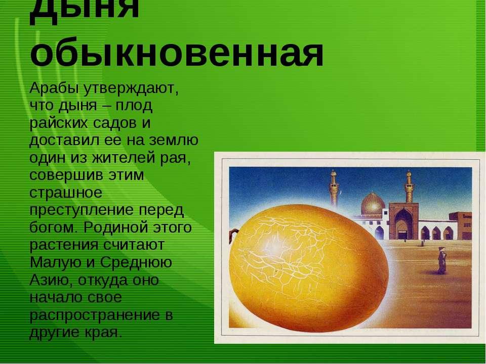 Дыня обыкновенная Арабы утверждают, что дыня – плод райских садов и доставил ...