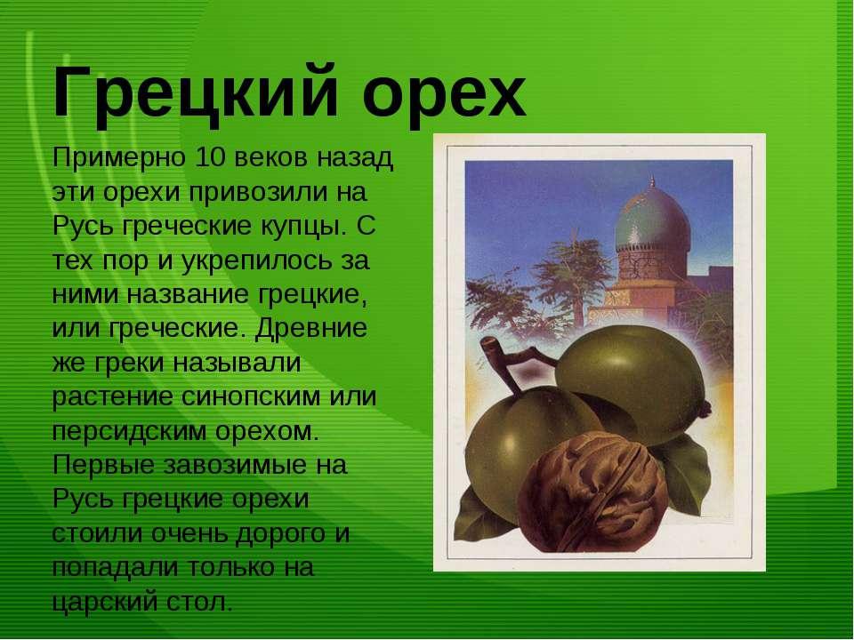 Грецкий орех Примерно 10 веков назад эти орехи привозили на Русь греческие ку...