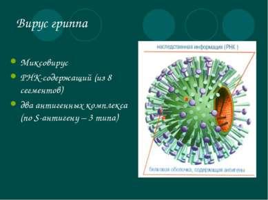Вирус гриппа Миксовирус РНК-содержащий (из 8 сегментов) два антигенных компле...