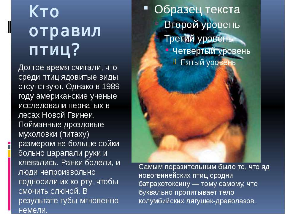 Кто отравил птиц? Долгое время считали, что среди птиц ядовитые виды отсутств...