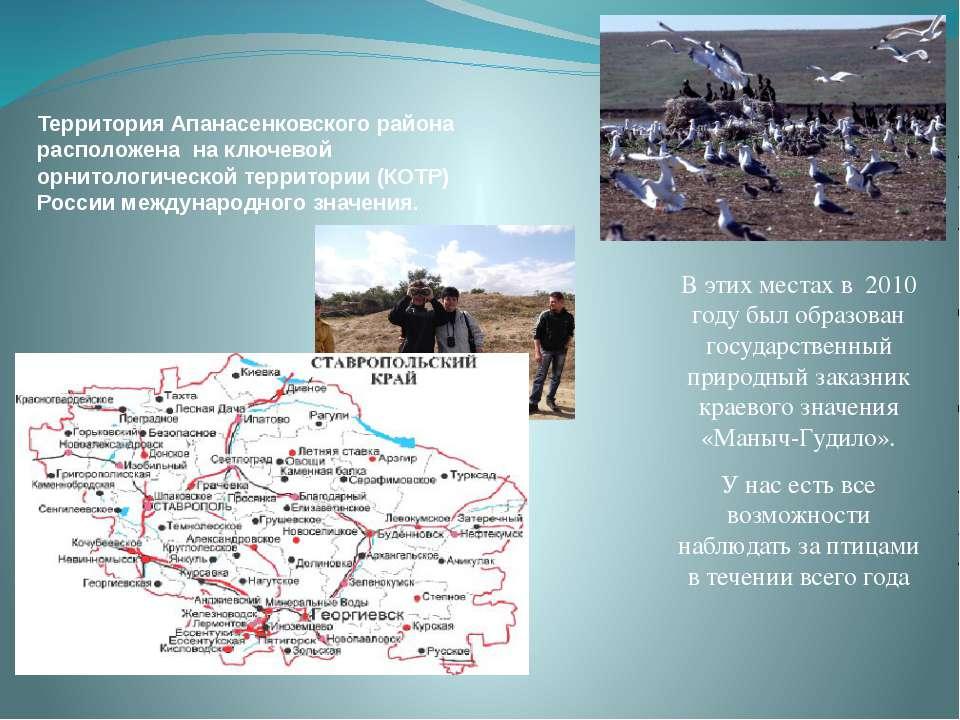 Территория Апанасенковского района расположена на ключевой орнитологической т...