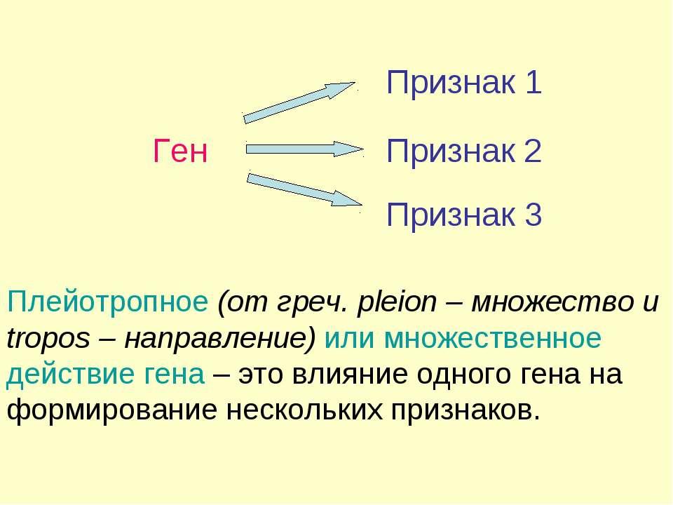 Ген Признак Плейотропное (от греч. pleion – множество и tropos – направление)...