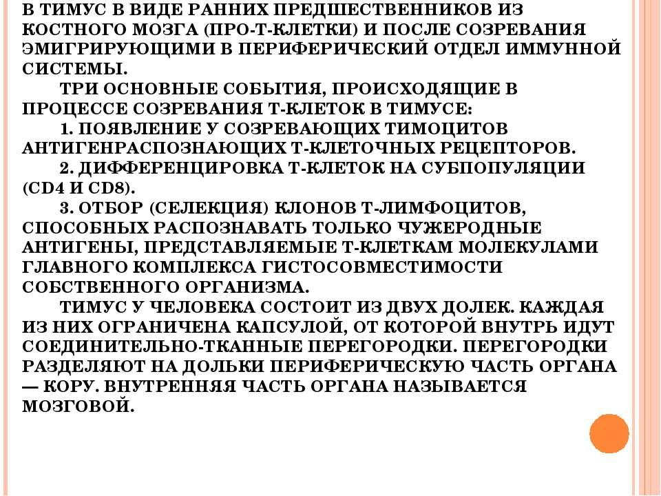 ТИМУС. СПЕЦИАЛИЗИРОВАН ИСКЛЮЧИТЕЛЬНО НА РАЗВИТИИ Т-ЛИМФОЦИТОВ. ИМЕЕТ ЭПИТЕЛИА...
