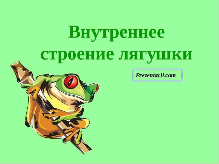 Внутреннее строение лягушки Внутреннее строение лягушки Prezentacii.com