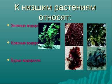 К низшим растениям относят: Зеленые водоросли Красные водоросли Бурые водоросли