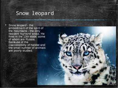 Snow leopard Snow leopard - the embodiment of the spirit of the mountains - t...