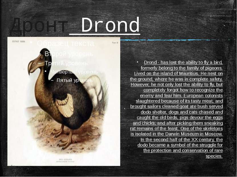 Дронт Drond Drond - has lost the ability to fly a bird, formerly belong to th...