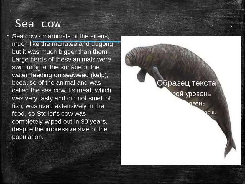 Sea cow Sea cow - mammals of the sirens, much like the manatee and dugong, bu...