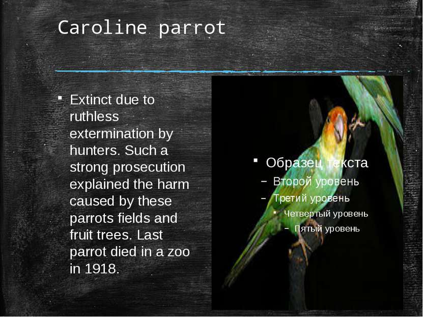 Caroline parrot Extinct due to ruthless extermination by hunters. Such a stro...