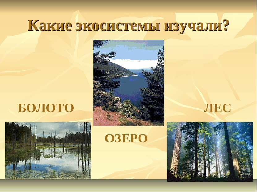 Какие экосистемы изучали? ОЗЕРО БОЛОТО ЛЕС