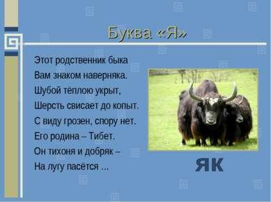 Буква «Я» Этот родственник быка Вам знаком наверняка. Шубой тёплою укрыт, Шер...