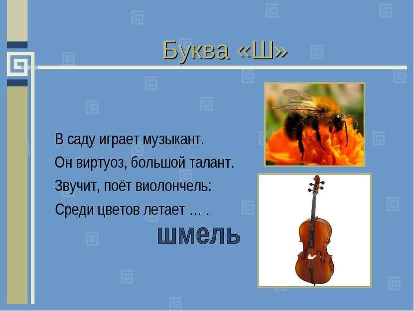 Буква «Ш» В саду играет музыкант. Он виртуоз, большой талант. Звучит, поёт ви...