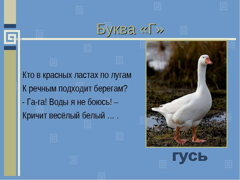 Буква «Г» Кто в красных ластах по лугам К речным подходит берегам? - Га-га! В...