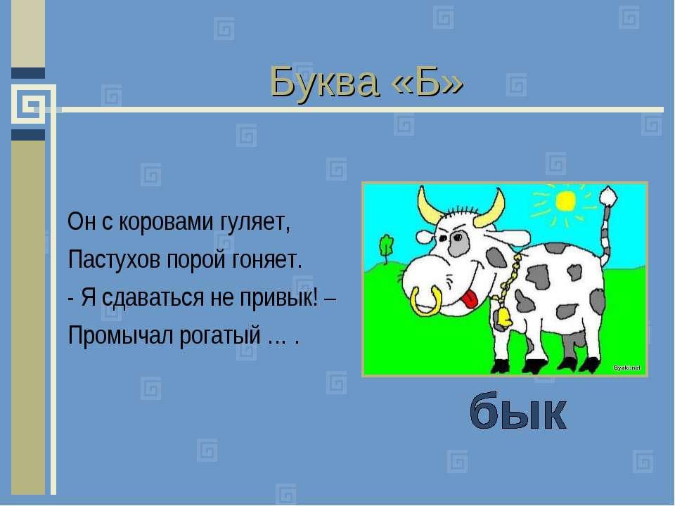 Буква «Б» Он с коровами гуляет, Пастухов порой гоняет. - Я сдаваться не привы...