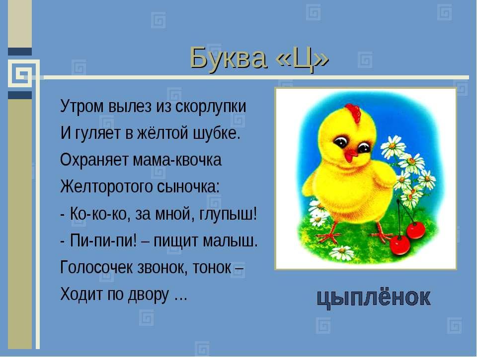 Буква «Ц» Утром вылез из скорлупки И гуляет в жёлтой шубке. Охраняет мама-кво...
