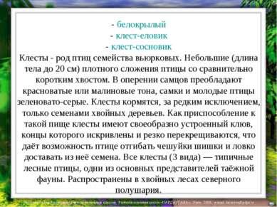 - белокрылый - клест-еловик - клест-сосновик Клесты - род птиц семейства вьюр...