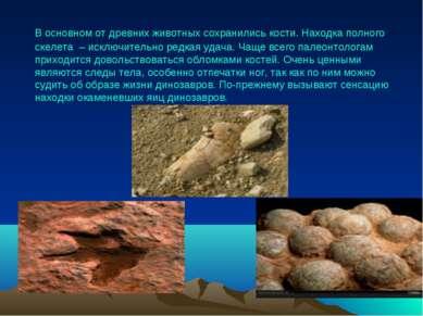 В основном от древних животных сохранились кости. Находка полного скелета – и...