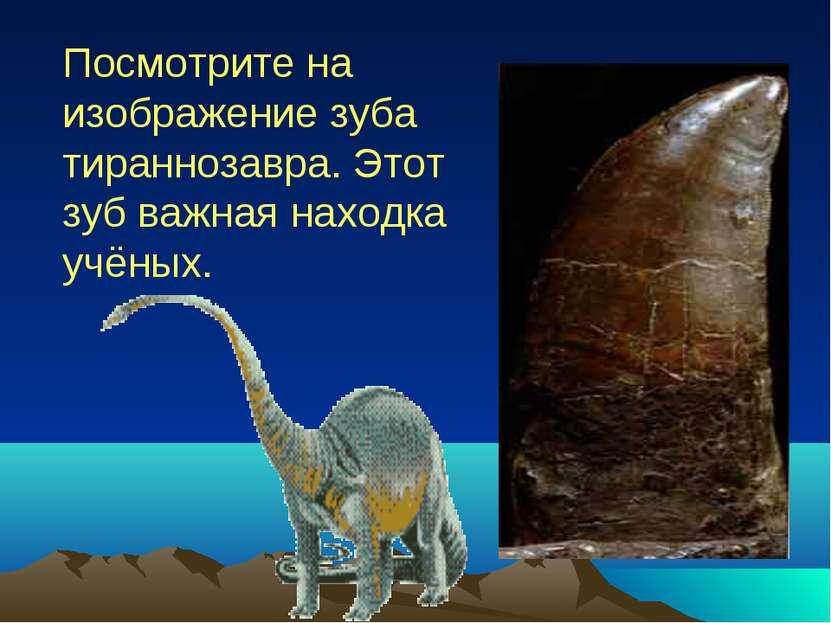 Посмотрите на изображение зуба тираннозавра. Этот зуб важная находка учёных.