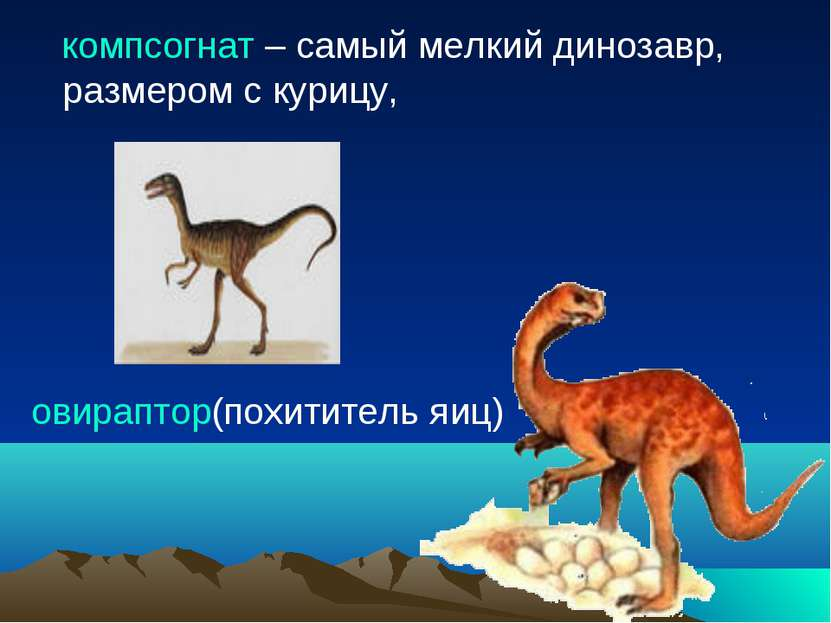 компсогнат – самый мелкий динозавр, размером с курицу, овираптор(похититель яиц)
