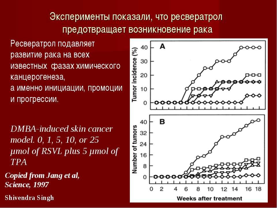 Вино поможет справиться с лишним весом Ресвератрол подавляет развитие рака на...