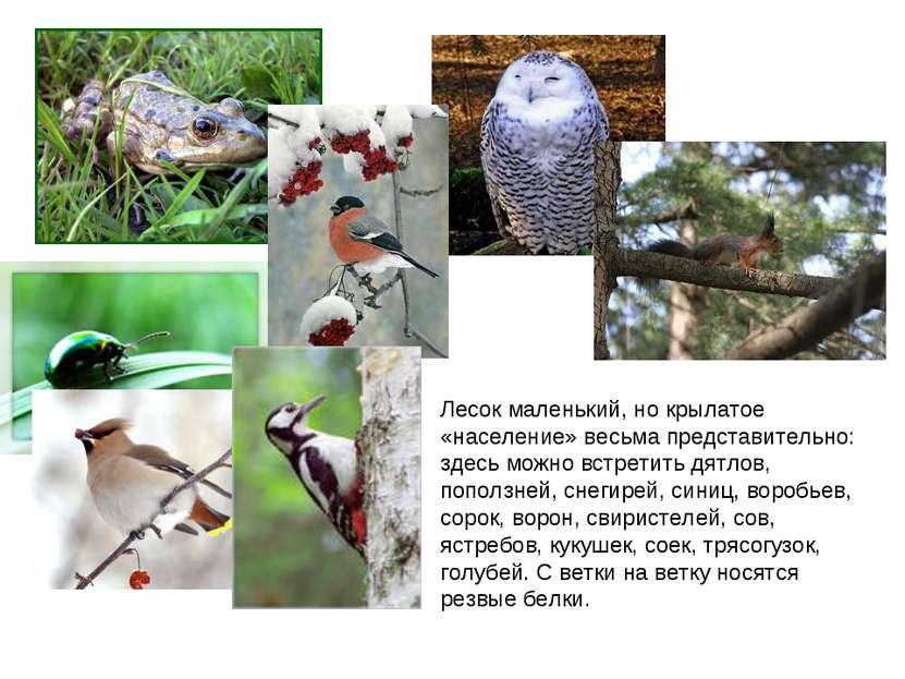 Лесок маленький, но крылатое «население» весьма представительно: здесь можно ...