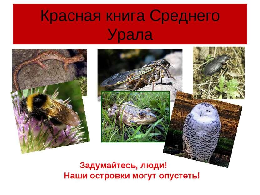 Красная книга Среднего Урала Задумайтесь, люди! Наши островки могут опустеть!