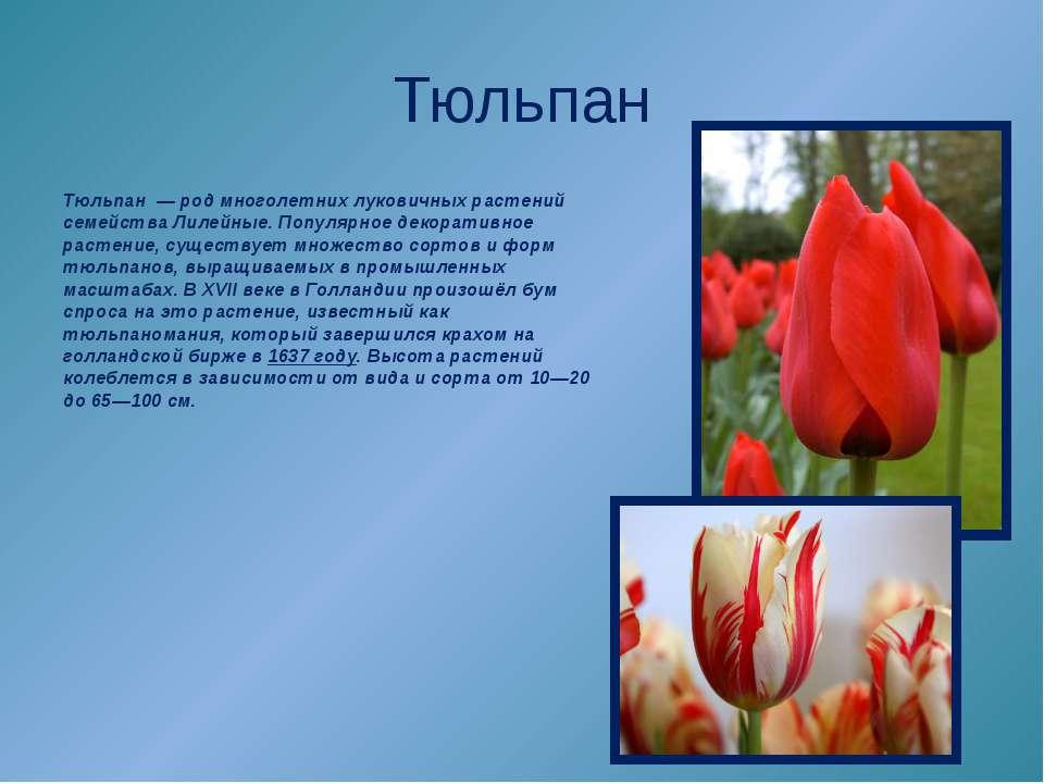 Тюльпан Тюльпан—родмноголетних луковичных растений семействаЛилейные. По...