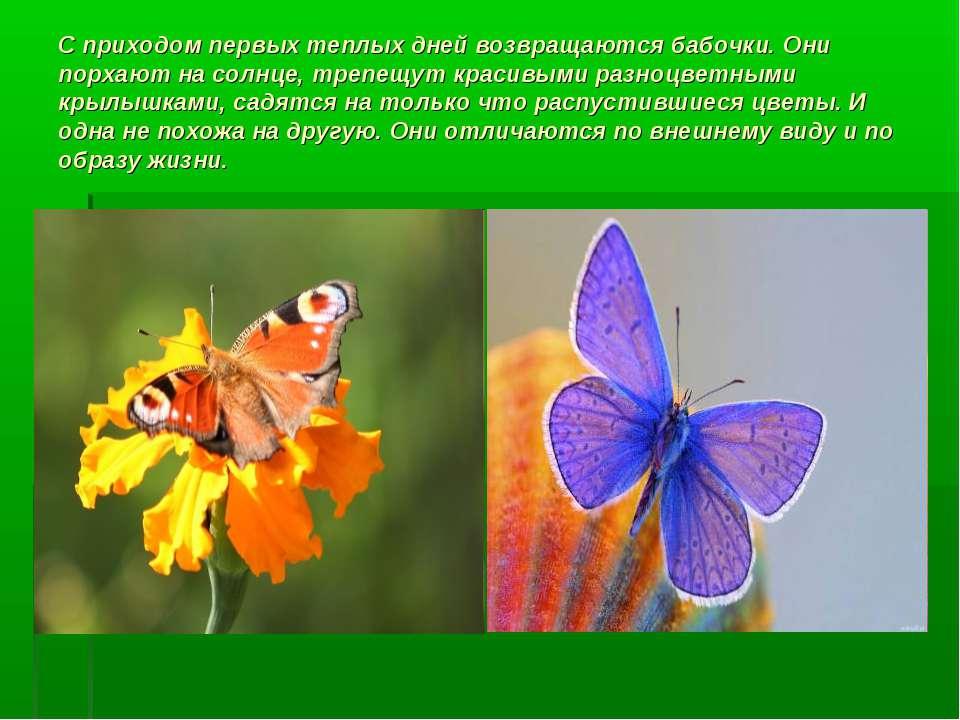 С приходом первых теплых дней возвращаются бабочки. Они порхают на солнце, тр...