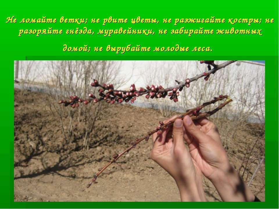 Не ломайте ветки; не рвите цветы, не разжигайте костры; не разоряйте гнёзда, ...