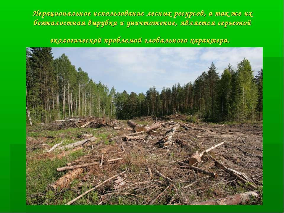 Нерациональное использование лесных ресурсов, а так же их безжалостная вырубк...