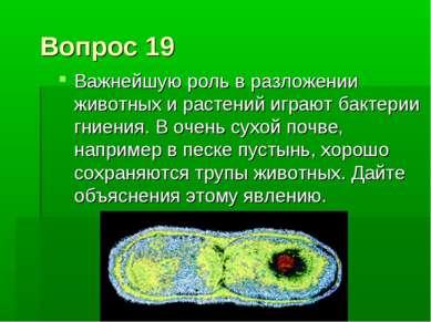 Вопрос 19 Важнейшую роль в разложении животных и растений играют бактерии гни...