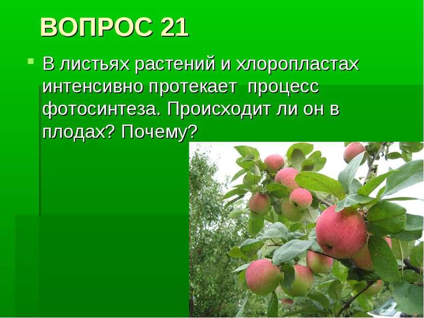 ВОПРОС 21 В листьях растений и хлоропластах интенсивно протекает процесс фото...